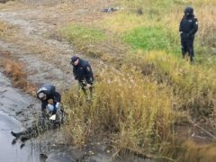На берегу реки Кудьма в Северодвинске нашли погибшего мужчину