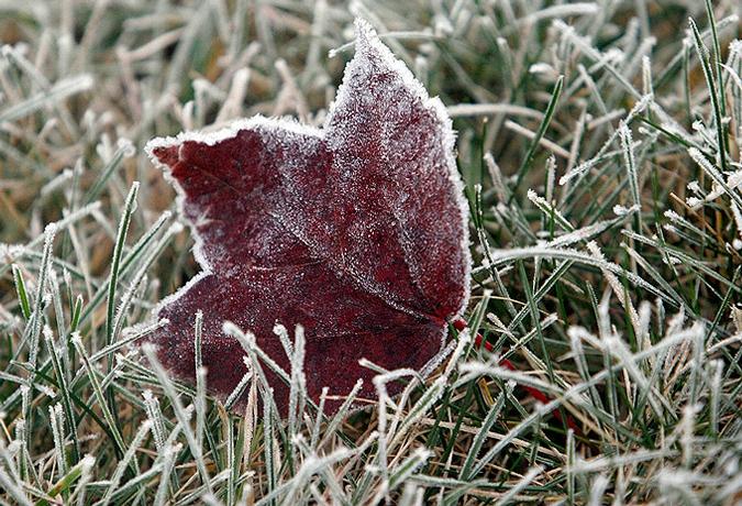 Синоптики предупреждают о заморозках в пятницу