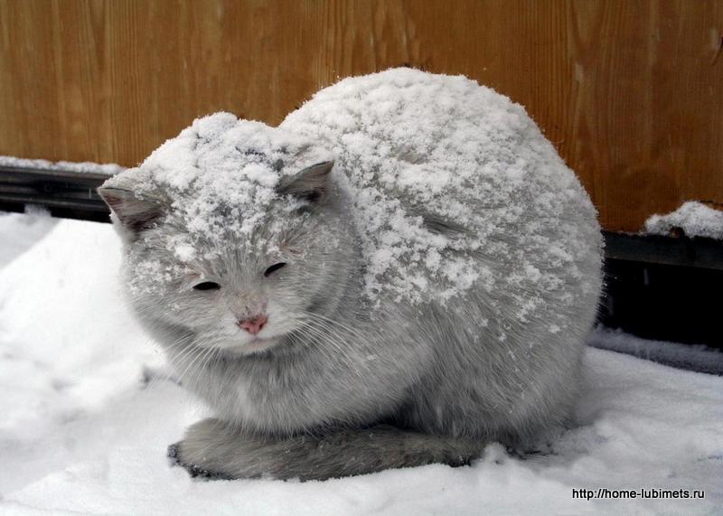 фото кошки застряла