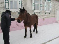 Неизвестные конокрады орудуют на территории Архангельской области