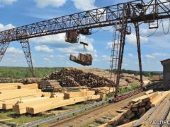 В Поморье выбирают лучшее предприятие лесного комплекса